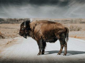 bison wall art debra gail office decor