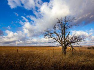 great plains tree blue sky debra gail