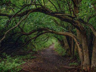 woodlands interior designers Tree Tunnel 0499 WOODLANDS