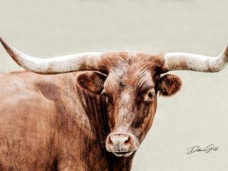 longhorn wall art 10408 debra gail photography