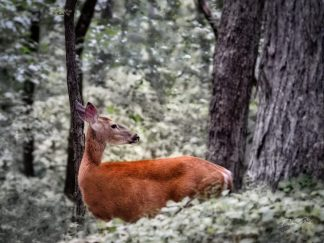 woodland deer wall art debra gail photography