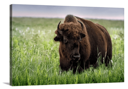 new release wall art prints wholesale - retail ranch collections canvas bison wall art print