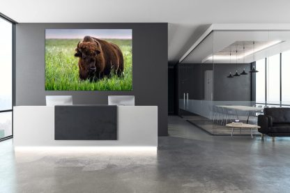 wholesale - retail ranch collections canvas bison wall art print tallgrass bison print wall art debra gail photography