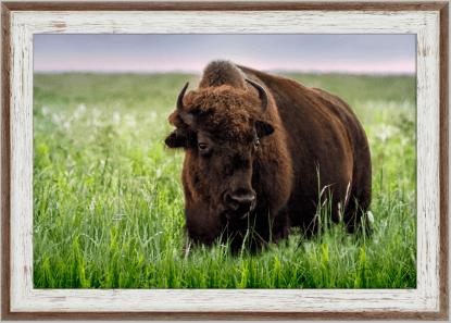 two-tone barnwood frame tallgrass bison print wall art debra gail photography