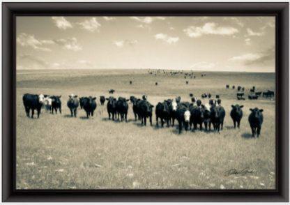 black frame Black Baldy and Angus Cow Wall Art
