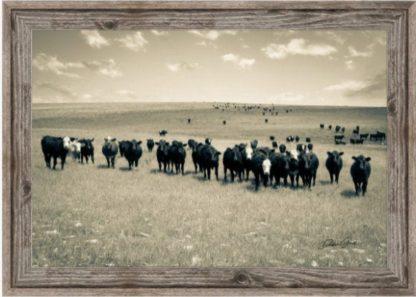 Barnwood frame Black Baldy and Angus Cow Wall Art