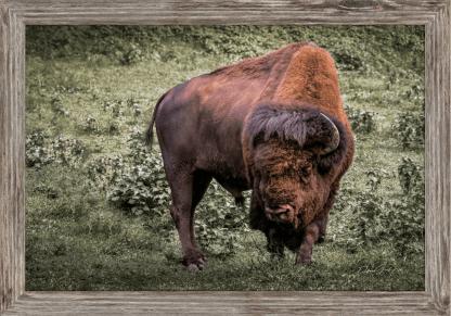 spiritual buffalo framed canvas bison wall art set yellowstone kansas oklahoma nebraska montana wyoming debra gail