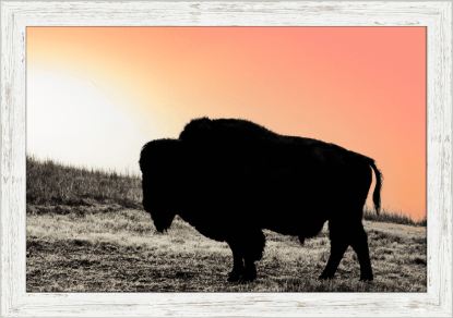 american bison wall art canvas framed Buffalo Sunset Wall Art Ranch collections Kansas debra gail