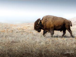 American Bison canvas buffalo on the Plains Wall Art hobby lobby debra gail kansas midwest on etsy