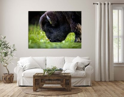 American Bison or Buffalo wall art oversized canvas on the Plains Wall Art No. 9568