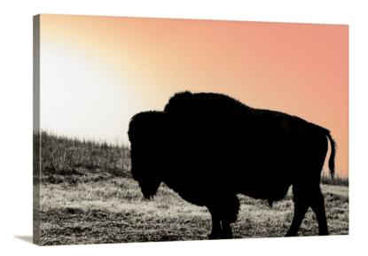 bison oversized canvas wall art Buffalo Sunset Wall Art Ranch collections Kansas debra gail
