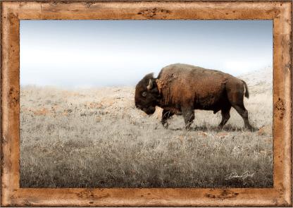 framed American Bison canvas buffalo on the Plains Wall Art hobby lobby debra gail kansas midwest on etsy
