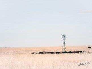Autumn Farmhouse Decor - Nebraska Windmill Wall Art - Great Plains Cattle